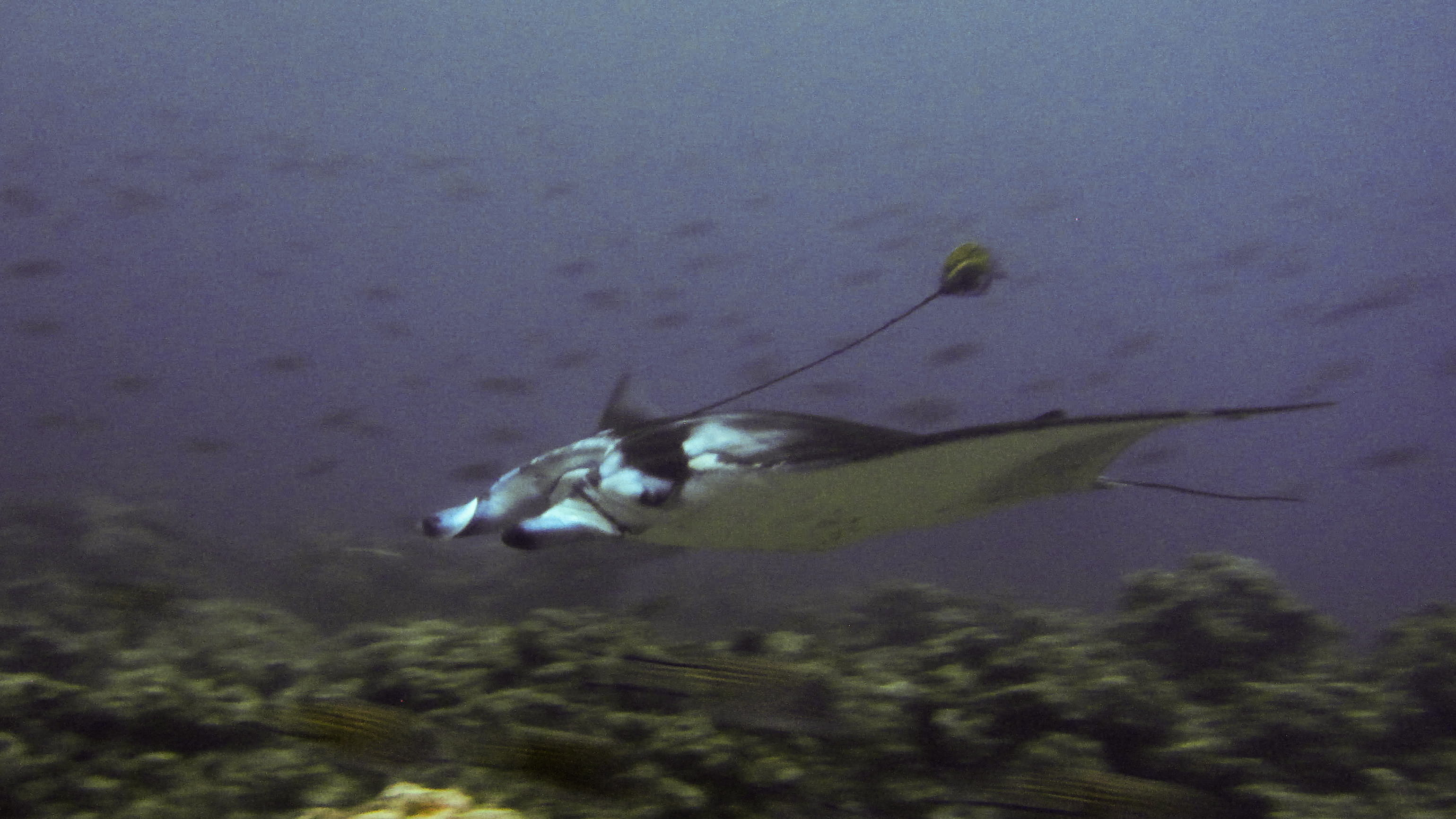 Manta with Bouy and rope around it