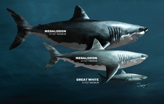 Perhaps The Most Well Known Prehistoric Shark Is The Megalodon Megalodon Could Reach Immense Sizes And Was Thought To Have Hunted Marine Mammals And Other