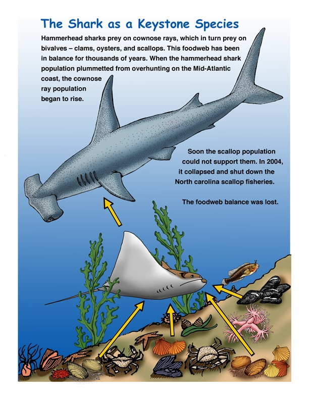 Diagram Of Loss Of Sharks - Electrical Work Wiring Diagram •